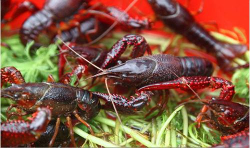 生态成品虾