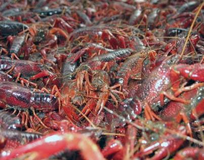 徐州生态成品虾供应