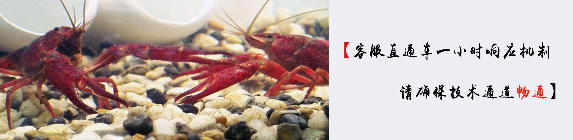 龙虾养殖技术